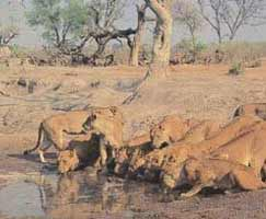 Sasan Gir Vacation Package