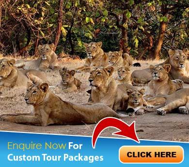Sasan Gir Tour Packages